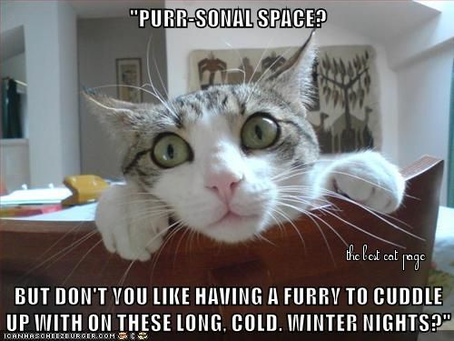 THE BEST CAT PAGE, FACEBOOK  https://www.facebook.com/pages/The-Best-Cat-Page/994713583879307?ref=tn_tnmn