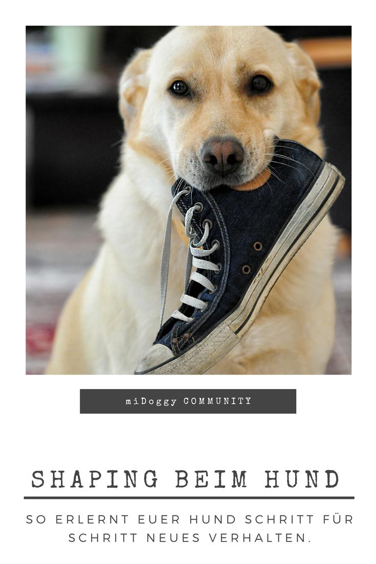 Shaping Neues Verhalten Schritt Fur Schritt Midoggy Community Shaping Neues Verhalten Schritt Fur Schrit In 2020 Hunde Welpen Erziehung Hundetricks Hundehimmel