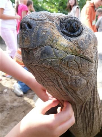 Schildkröte-pflegen-Klein.jpg (360×480) | animaux | Pinterest ...