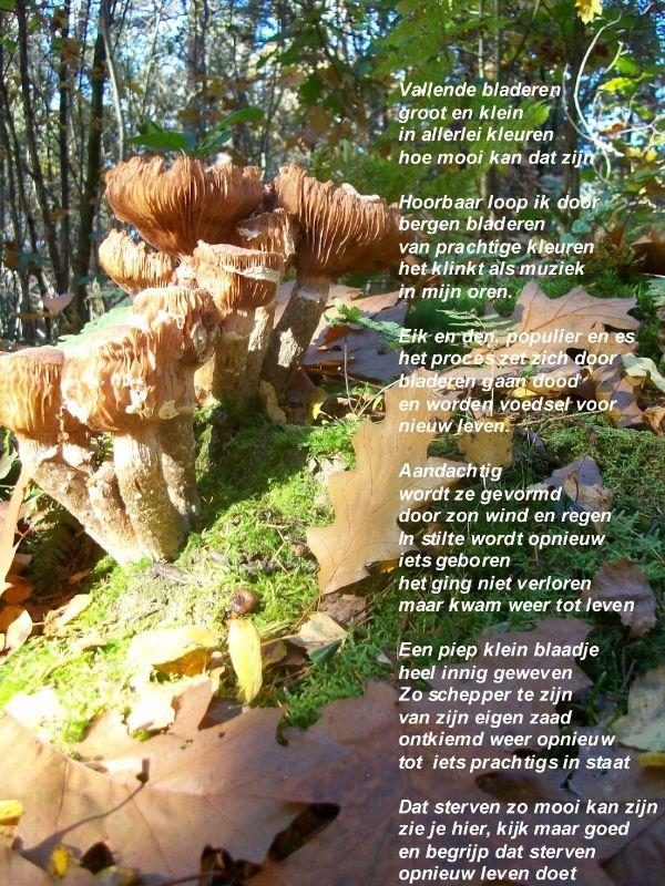 Citaten Herfst Pool : Pin van gw s op gedichten en spreuken poems quotes