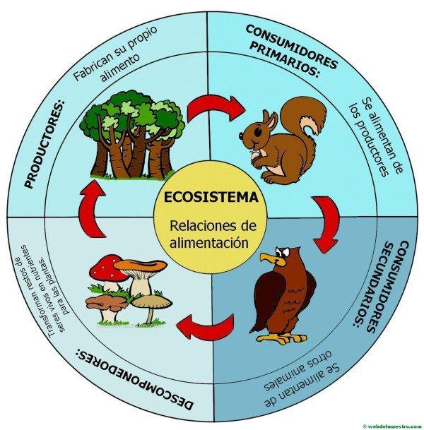Ecosistema Cadena Alimenticia Web Del Maestro Experimentos De Ciencias Naturales Ecosistemas Proyectos De Ecosistemas