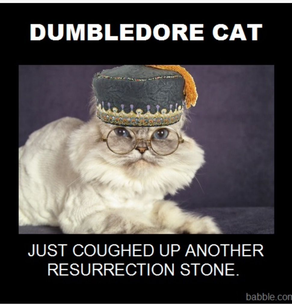 Bravo Bravo Well Done Dumblecat Harry Potter Memes Hilarious Harry Potter Cat Grumpy Cat
