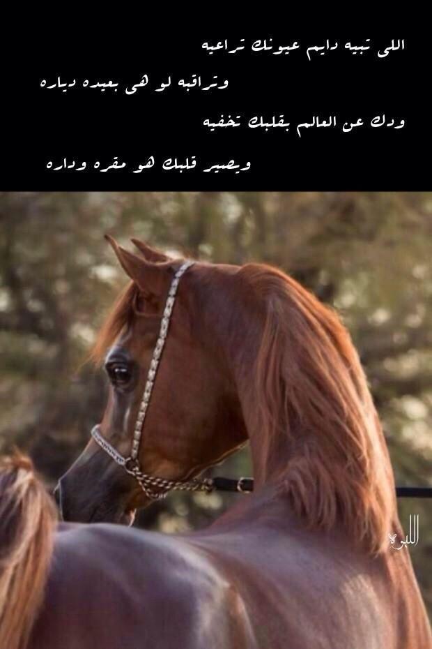 Pin By ʝɛɛɬɛƙ Al3nzii On عشق الخيل Arabic Quotes Arabic Words Life Quotes