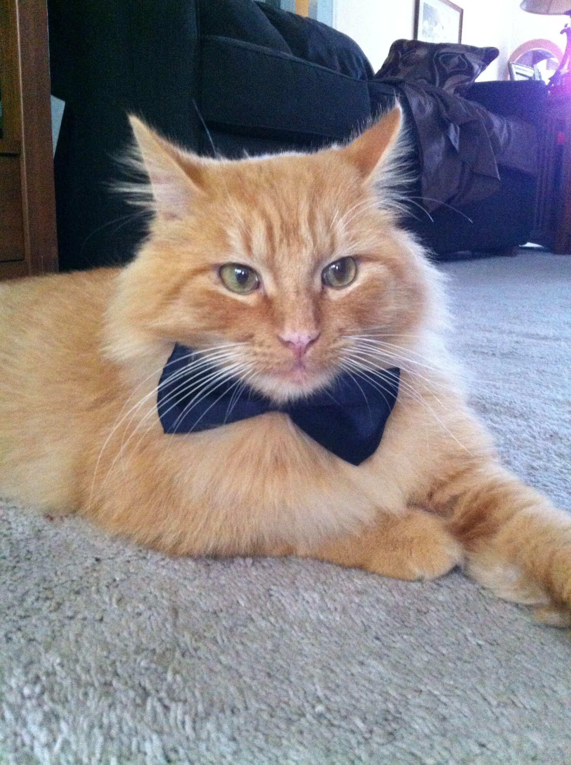 Kitten In A Bow Tie Adfefaacbaf