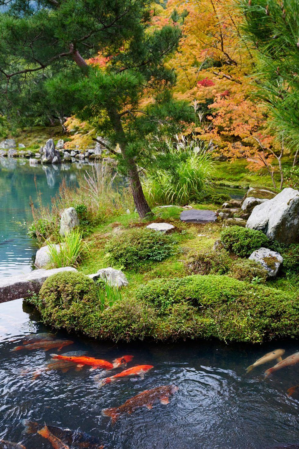 Laer Deg A Elske Den Forhatte Mosen Og Fa En Japansk Zen Hage Japan Garden Japanese Garden Moss Garden