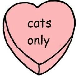 ❤ Cats Only ❤