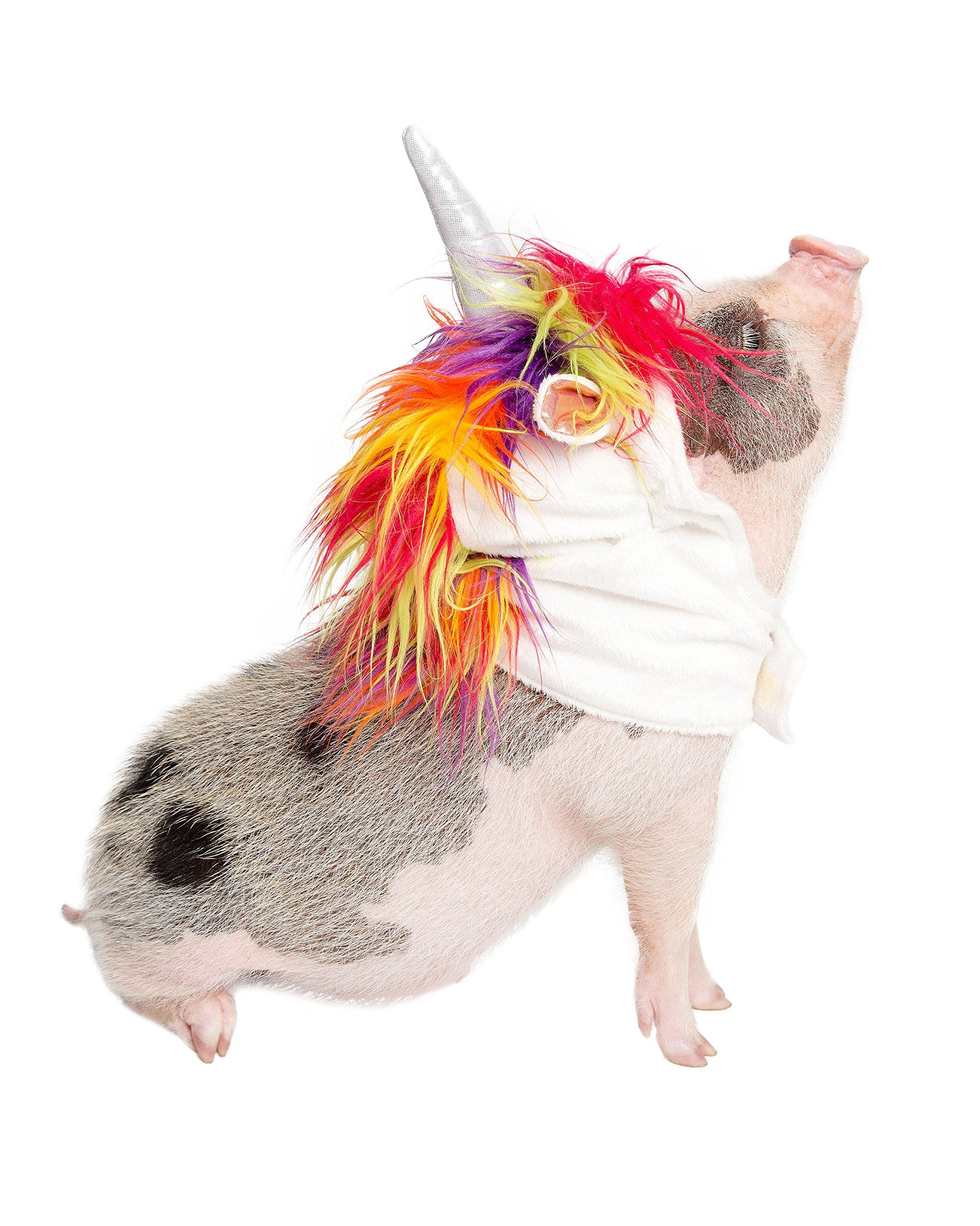 d9183a1bd0a47 Unicorn Dog Costume and Cat Costume Pet Costumes by Pet Krewe Small Dog/Cat  -- More info could be found at the image url. (This is an affiliate link) #  ...