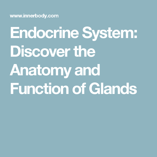 Endocrine System: Discover the Anatomy and Function of Glands ...