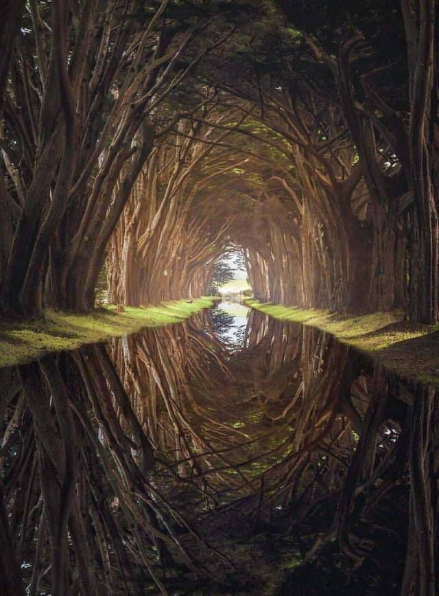 42 Choice Pics To Help You Get Through The Day is part of Cypress tree tunnel - A much needed distraction from the day
