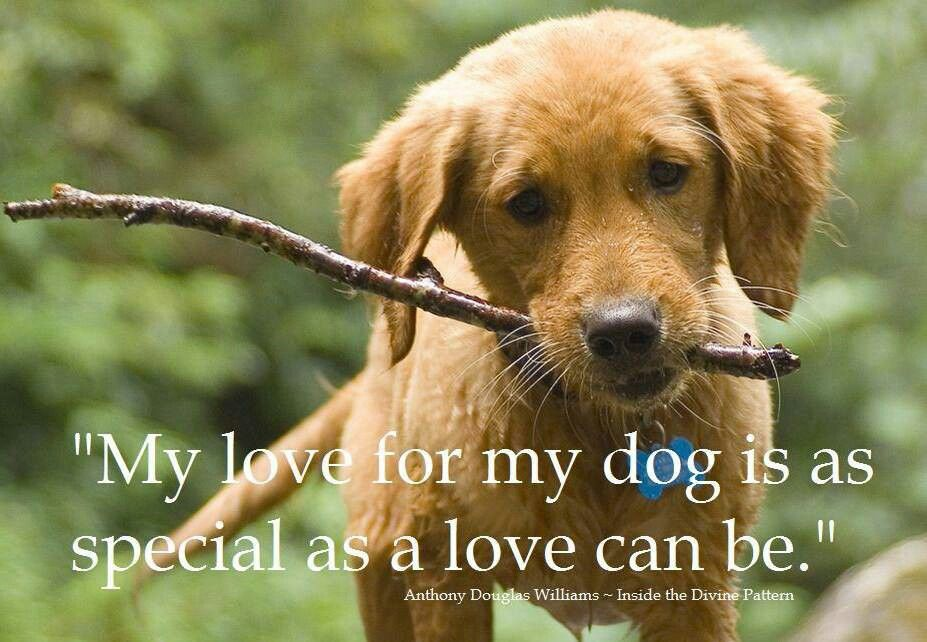 And this is why Dog is Man's Best Friend! <3