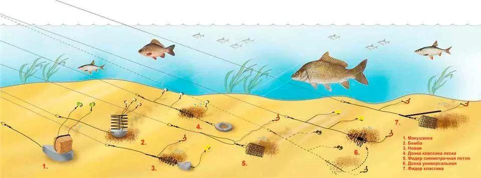 Ловля рыб на донку