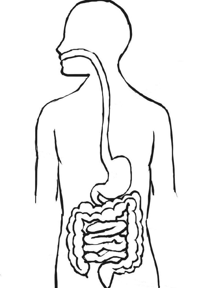 Docenteca El Sistema Digestivo Actividades Primaria Sistema Digestivo Dibujo Sistema Digestivo Actividades Para Primaria