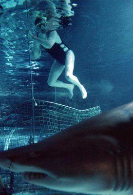 Hajdyk med 100% hajgaranti - Kolmårdens Tropicarium  Want to go and swim with the Sharks?