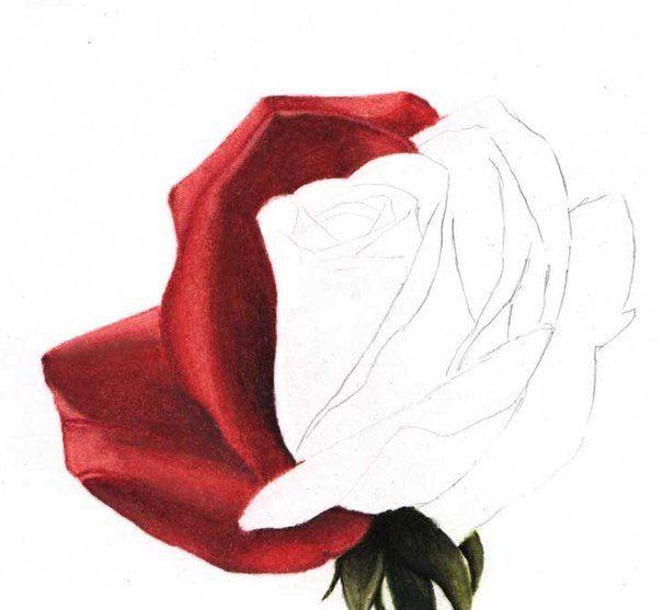 Wie zeichnet man eine Rose - Anleitung - Rose einfach