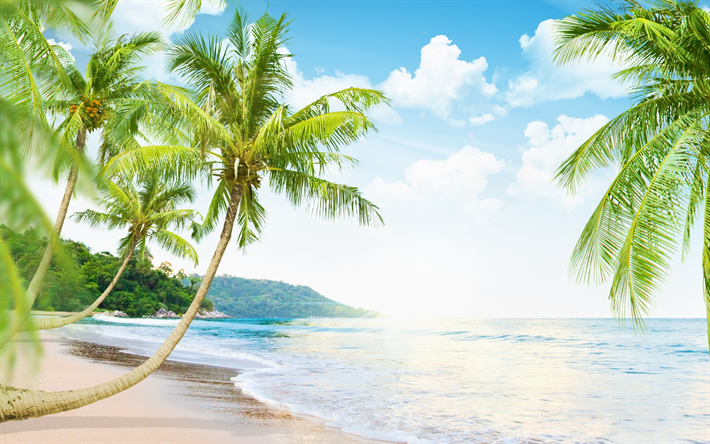 Download Wallpapers Ocean Tropical Island Palms Sea Waves Coast Summer Holidays Besthqwallpapers Com Beach Mural Beach Wall Murals Summer Beach Pictures