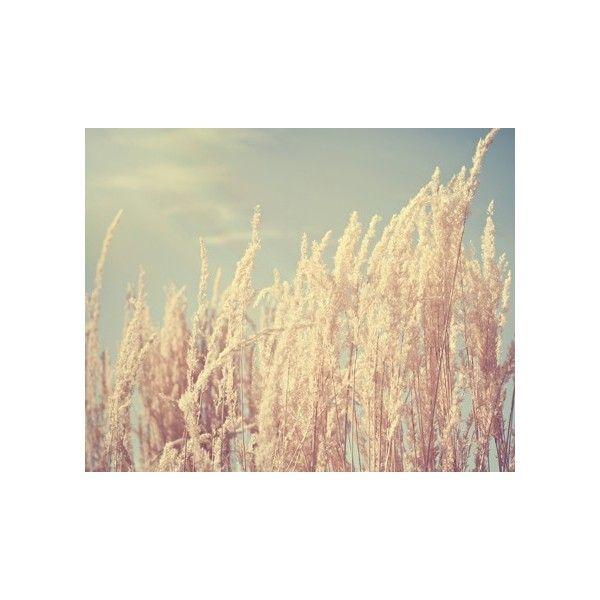 summer nature photograph / light, pale blue sky, sun, sunshine, wheat,... ($28) ❤ liked on Polyvore