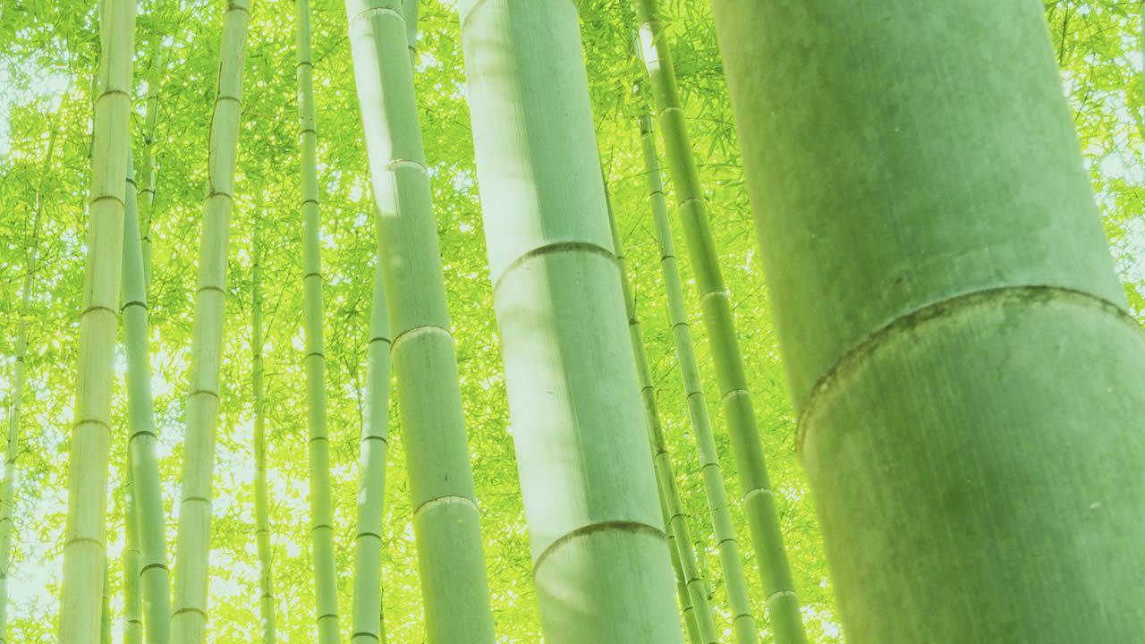 Bamboo wallpapers widescreen bamboo wallpaper fantastic