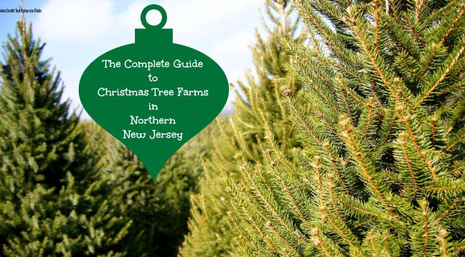 Things To Do In New Jersey Christmas Tree Farm Tree Farms New Jersey