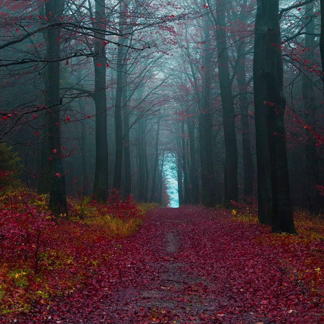 Hameln´s Forest, Germany