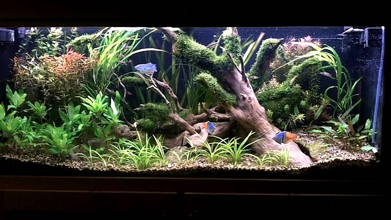 how to: aquascape/tank overview | aquarium ideas | pinterest