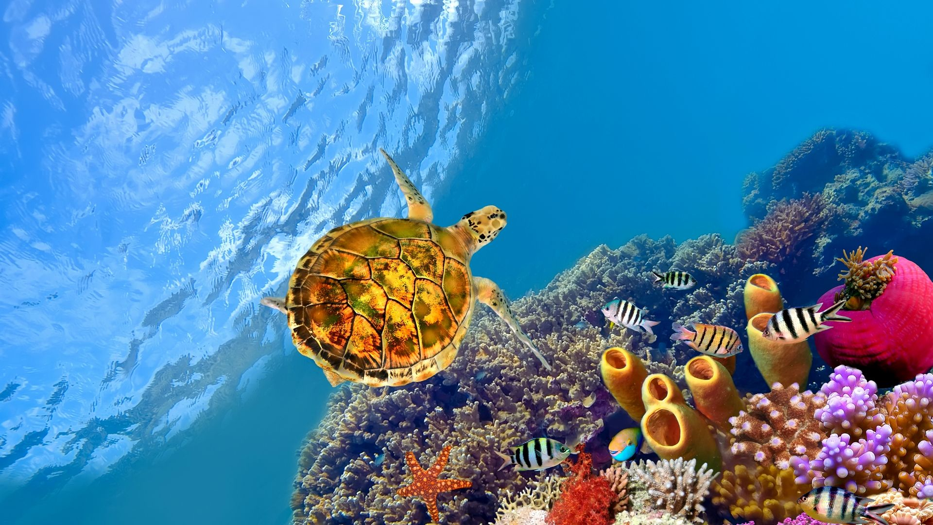 Free Desktop Wallpaper Windows Underwater Wallpaper Turtle Wallpaper Hd Wallpaper