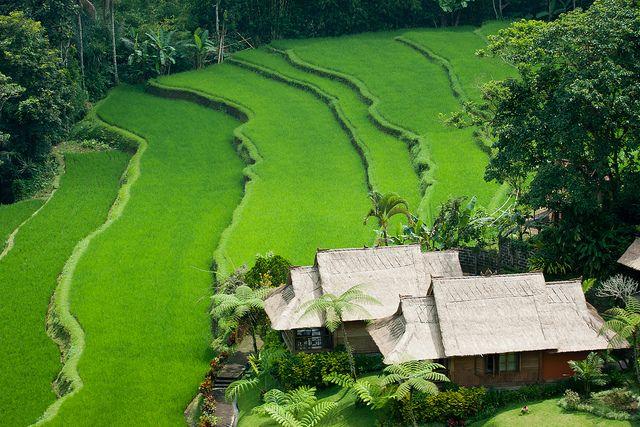 Chalets. Bali, Indonesia