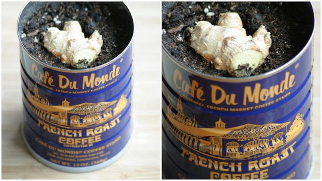 Dream State: Grow Your Own Ginger At Home!