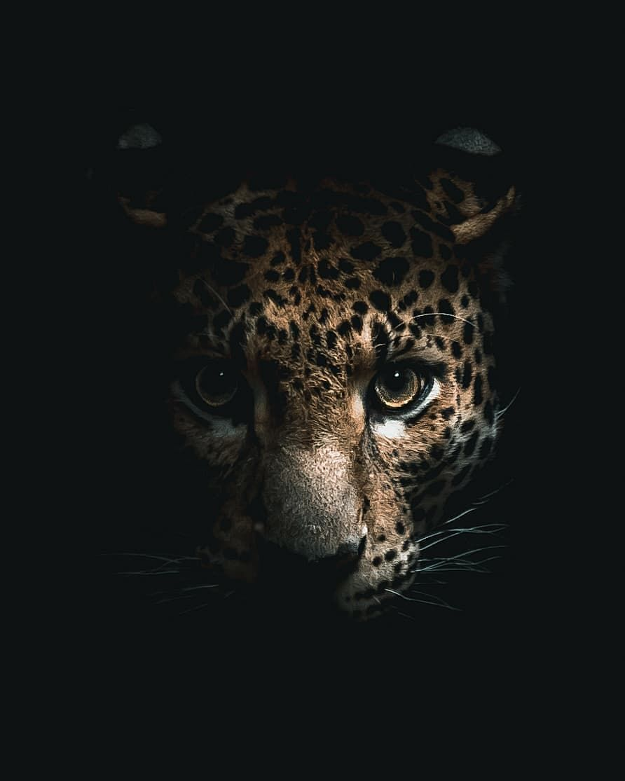 Instagood On Instagram Alexisrateau Big Cat In The Darkness Ready To Attack Cat Dark Cat Attack Big Cats