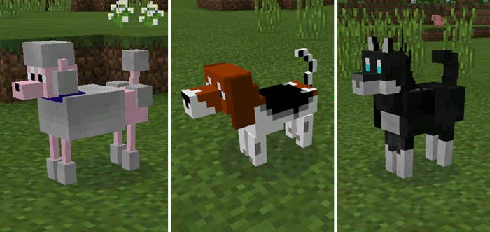 More Pets Mod 1 13 1 And 1 12 2 Has Been Created To Ensure That