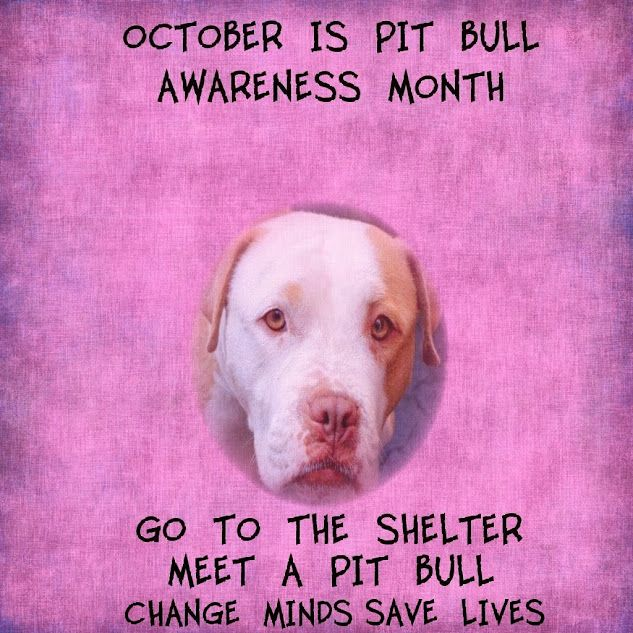 October is National Pit Bull Awareness Month. Please visit your local shelter…