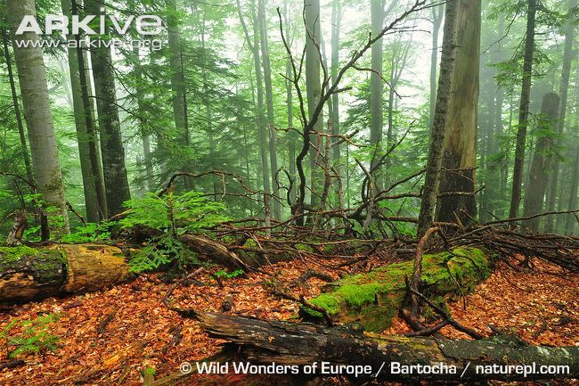 In forest ecosystems dead wood is just as important as living trees with many species depending upon it as a habitat or food source