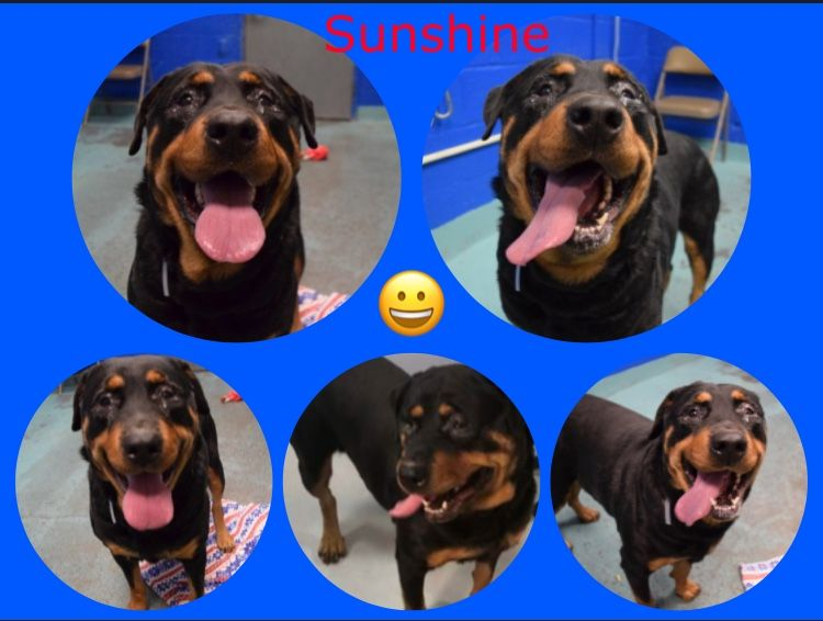 Safe 1 19 18 By For The Love Of Dogs Rottweiler Rescue
