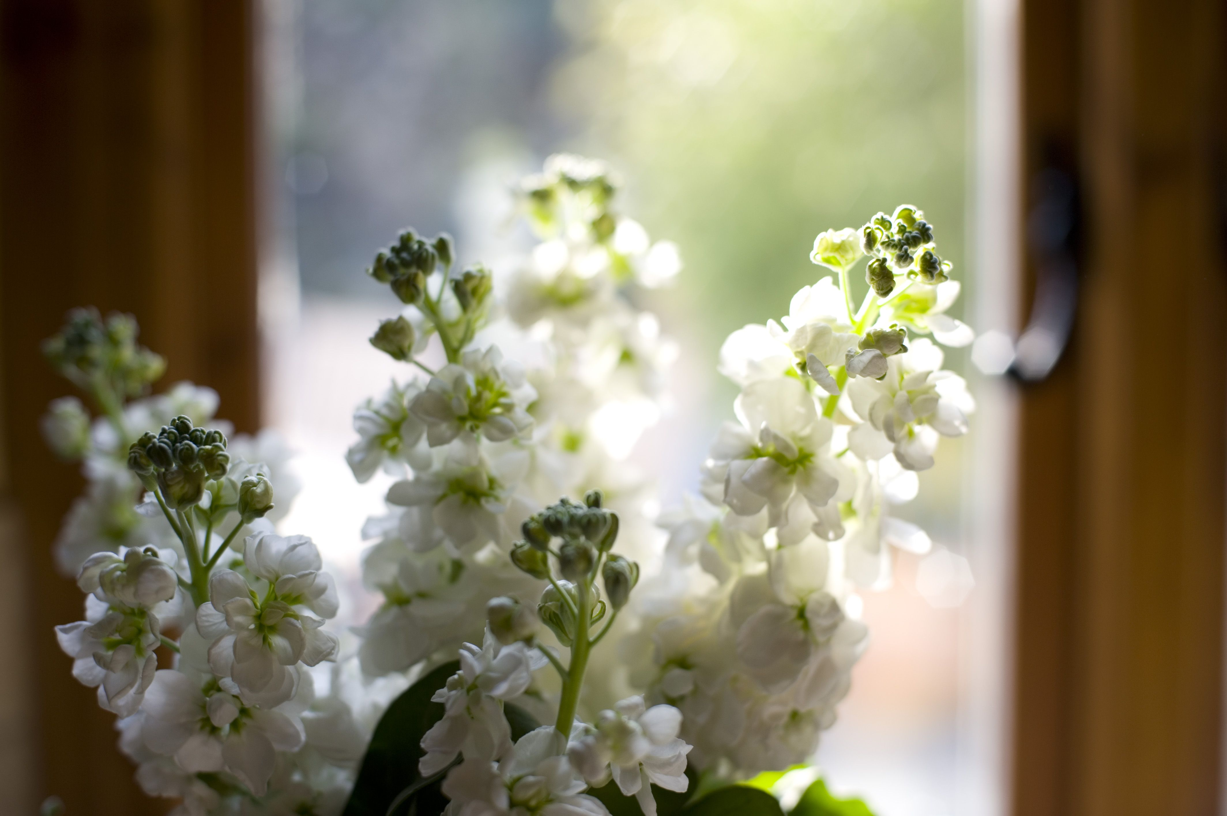 Scented White Stocks For Table Arrangements And Urns Entertaining