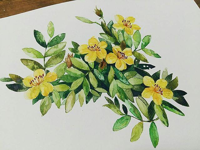 진짜는 이렇단 말이지. 쌤쵝오🙄 #watercolor #watercolour #botanical #botanicalart #botanic #botanicalpainting #flora #leaves #flowers #art #artwork #artstudio #artclass #artstagram #ground37c #신논현 #강남역 #그림그리기 #그림스타그램 #coloring #sketch #일상 #dailywork #dailydrawing #daily