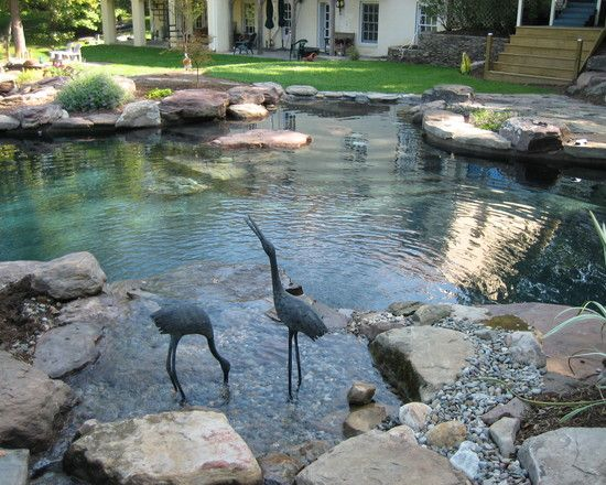 Swimming Pool Design Ideas Inspiration Pictures And Remodels Natural Swimming Ponds Swimming Pond Natural Swimming Pools