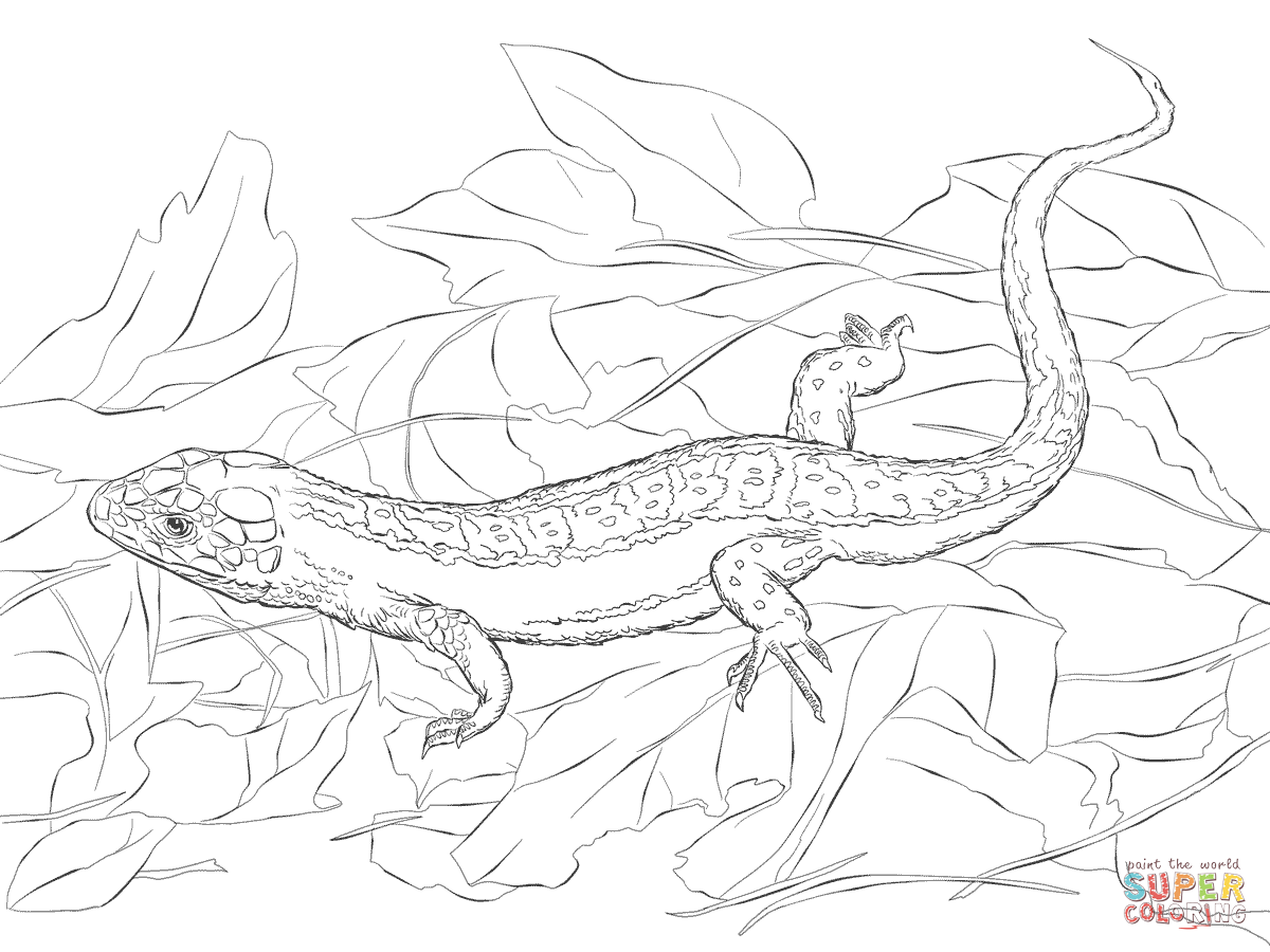 Sand Lizard Coloring Page Supercoloring Com Sand Lizard Coloring Pages Mermaid Coloring