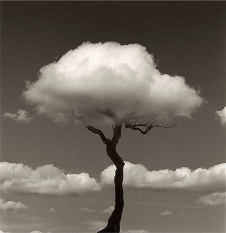 tree (by Chema Madoz)