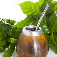 Yerba mate to tradycyjny napój w krajach Ameryki Południowej. Nie można mówić o mate w Polsce bez wymienienia nazwiska Wojciecha Cejrowskiego, który ją rozpropagował. Yerba ma działanie pobudzające – zawiera kofeinę.