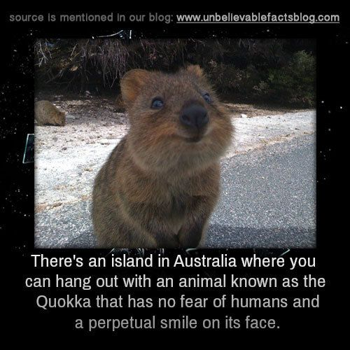There's an island in Australia where you can hang out with ...