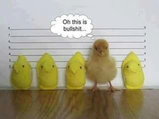 Bad birdy lol