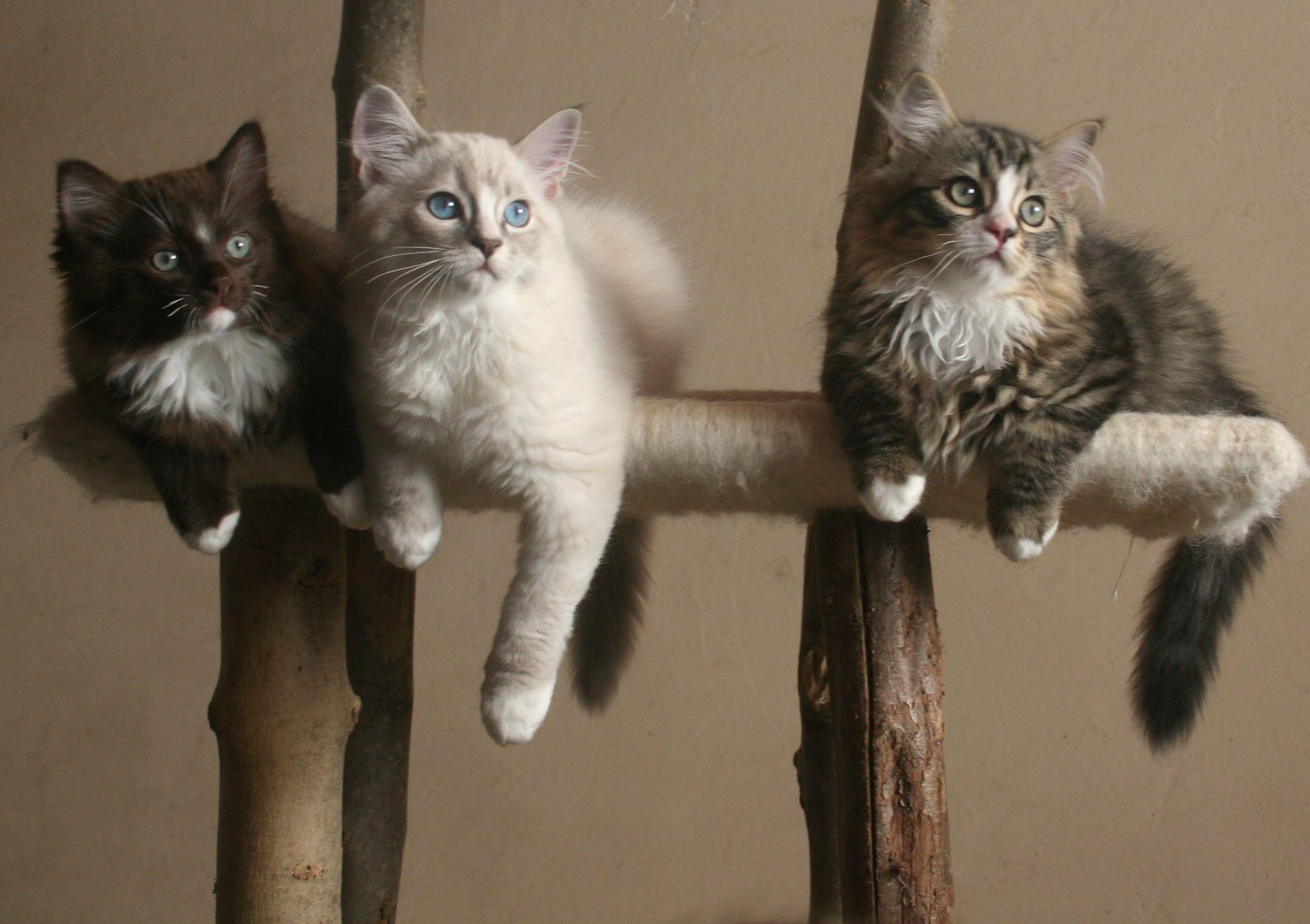 Cracker in het midden Animals, Kitty, Cats