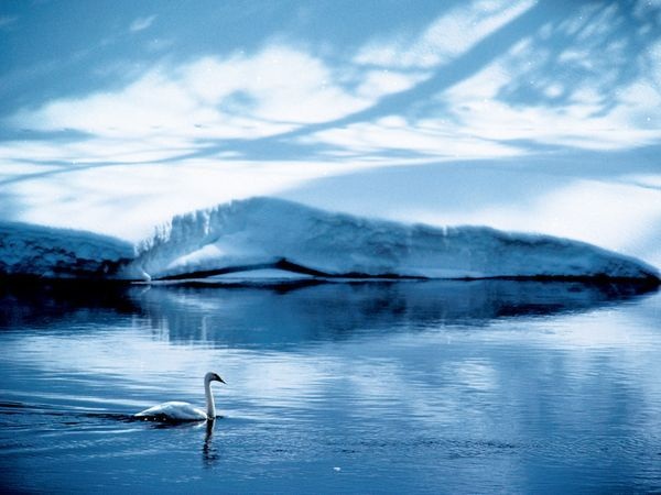 This Serene Image By Photographer James Blair Succeeds All The More Because Of Its Cool Blue