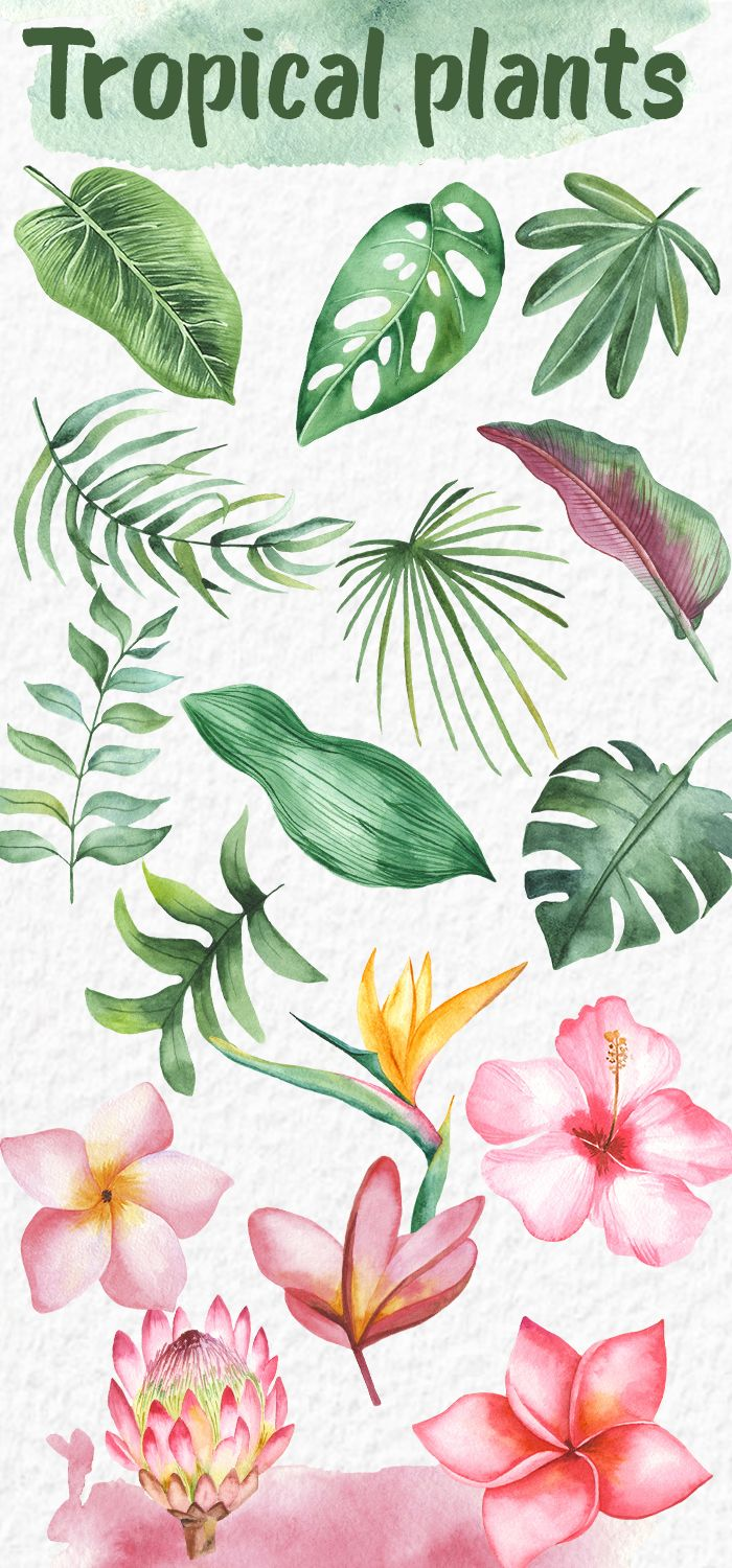 Tropical plants Leaves and flowers Watercolor clipart -   18 tropical plants Watercolor ideas