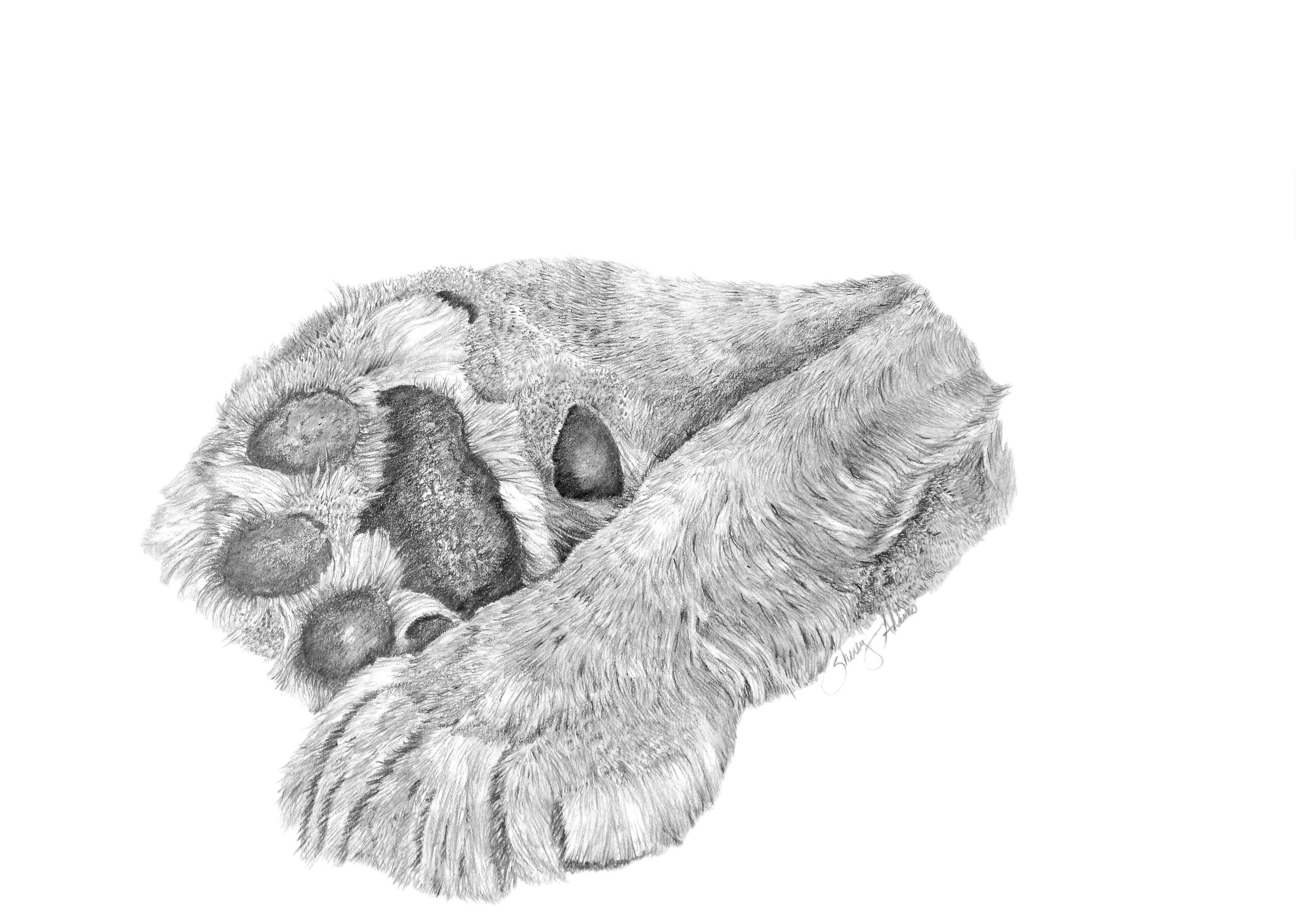 Lion paws print of original pencil drawing nature cat wildlife christian art by sherryadkinsartwork on etsy