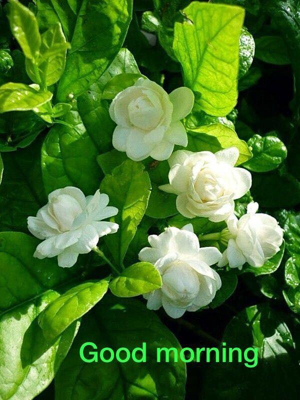 Good Morning Mother Earth Good Morning Pinterest Flowers