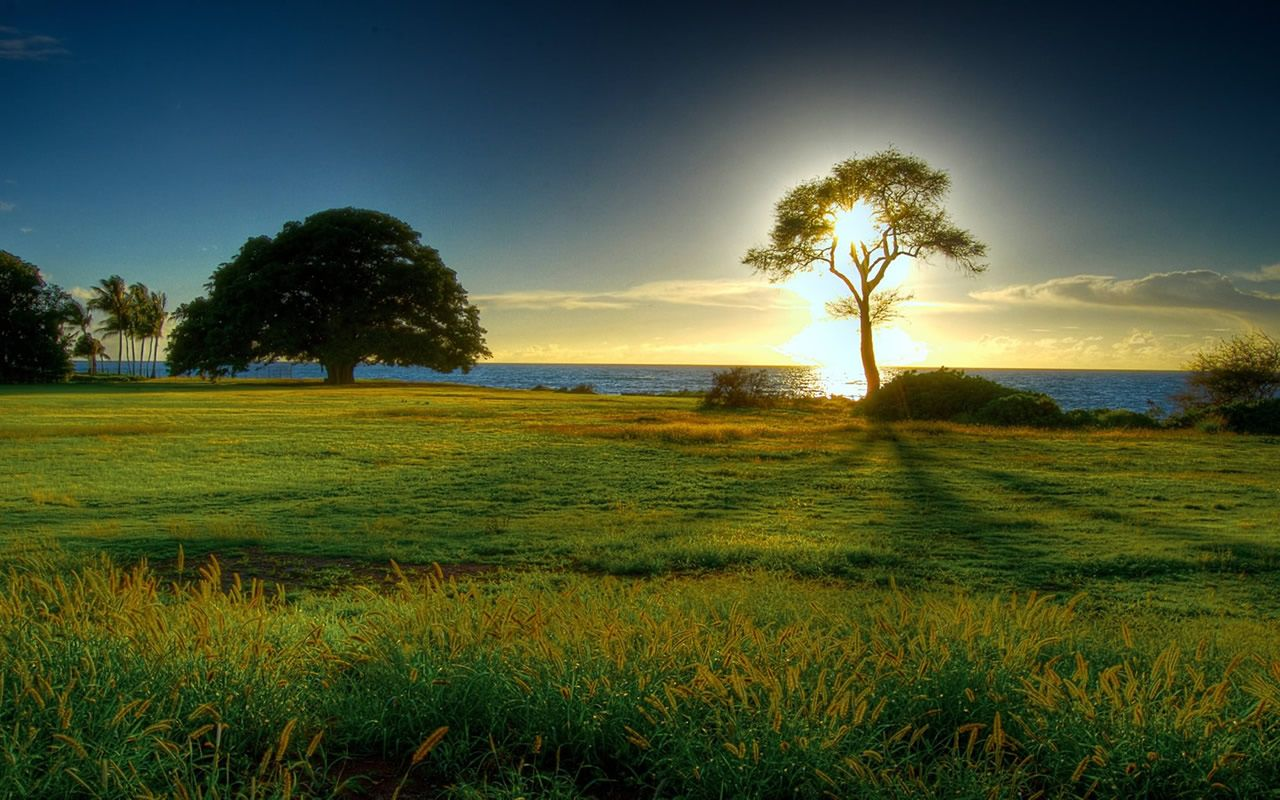 Wallpaper name  sun set grass land hd wallpaper  Description  The sun set  is eminent and it is a beautiful evening  In this picture you see the blue  sky. 15 spring now that39s nifty   Nature   Pinterest   Spring