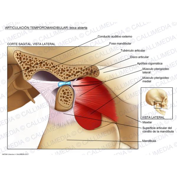 Pin On Anatomía