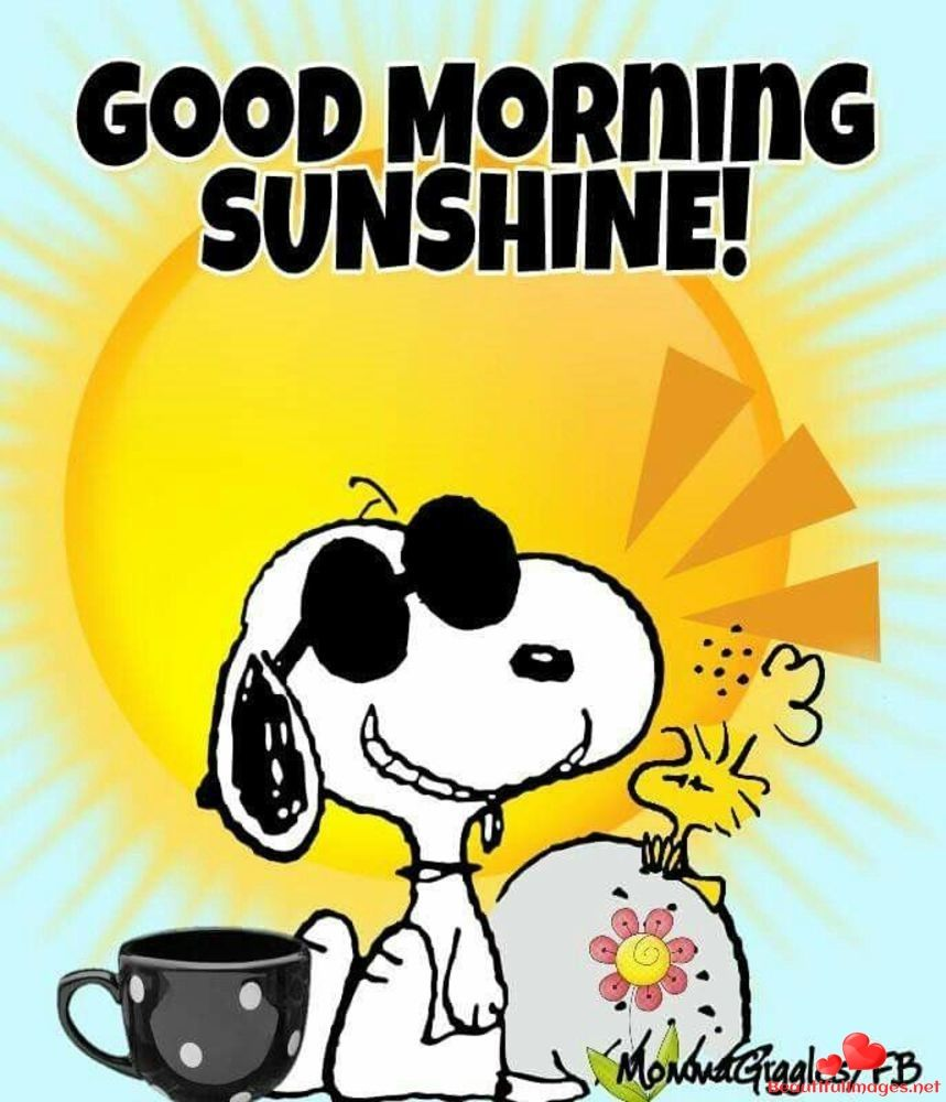 Download For Free Wonderful Images For Facebook And Whatsapp Quotes Sayings And Blessings For Your Happy Funny Good Morning Memes Snoopy Funny Morning Memes