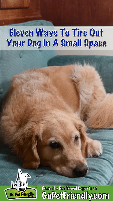 Photo of entrenamiento del perro Salto # entrenamiento del perro Salto # comportamiento del perro básico