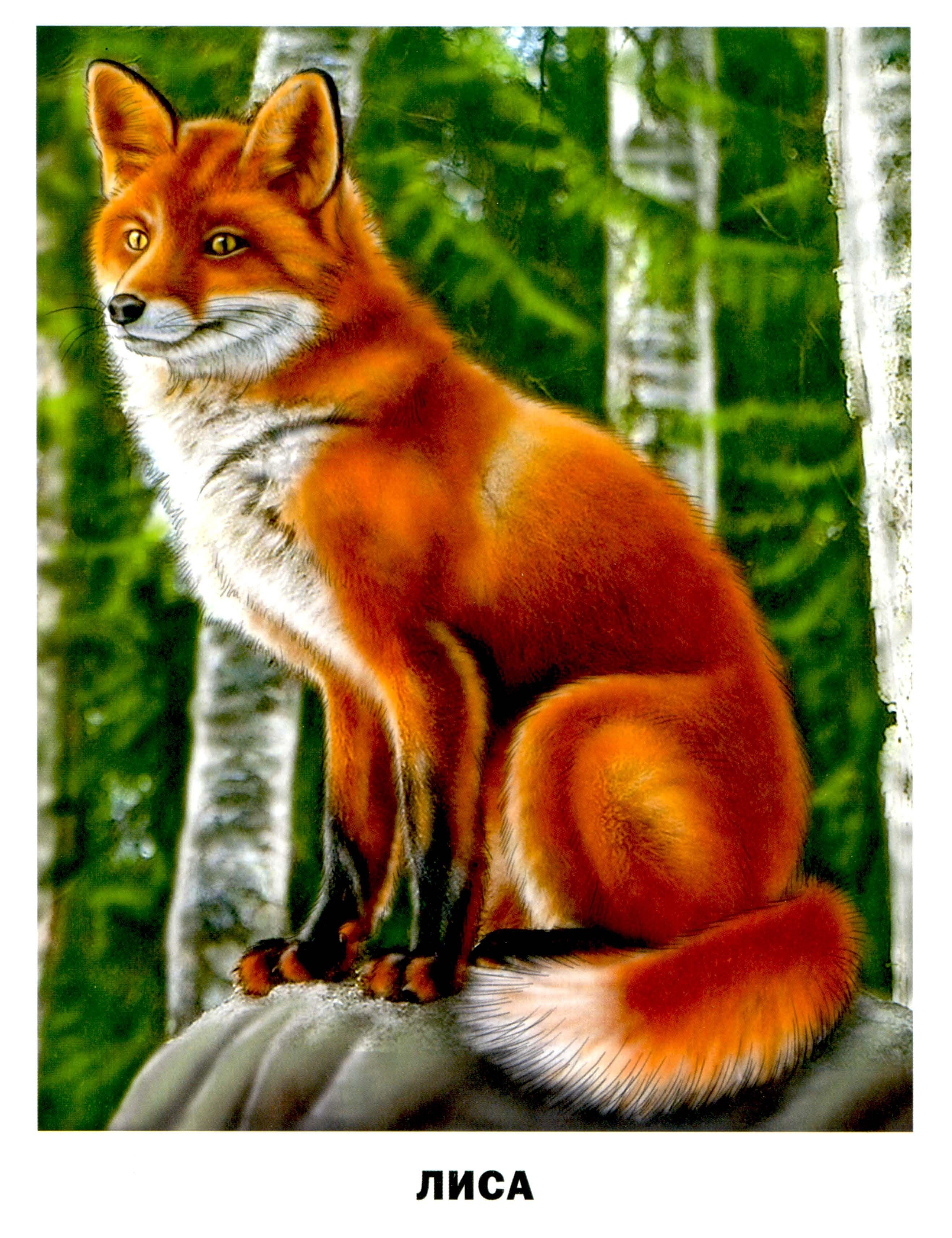 Картинки с изображением лисы для детей